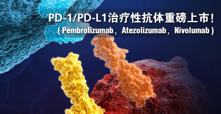 PD-1 inhibitory antibodies
